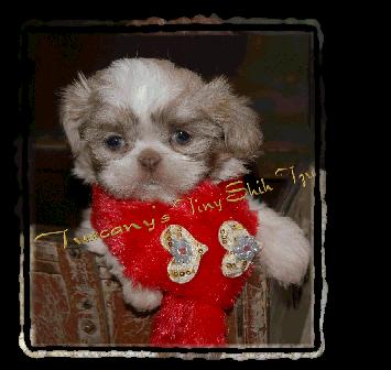 Bailey-355x336
